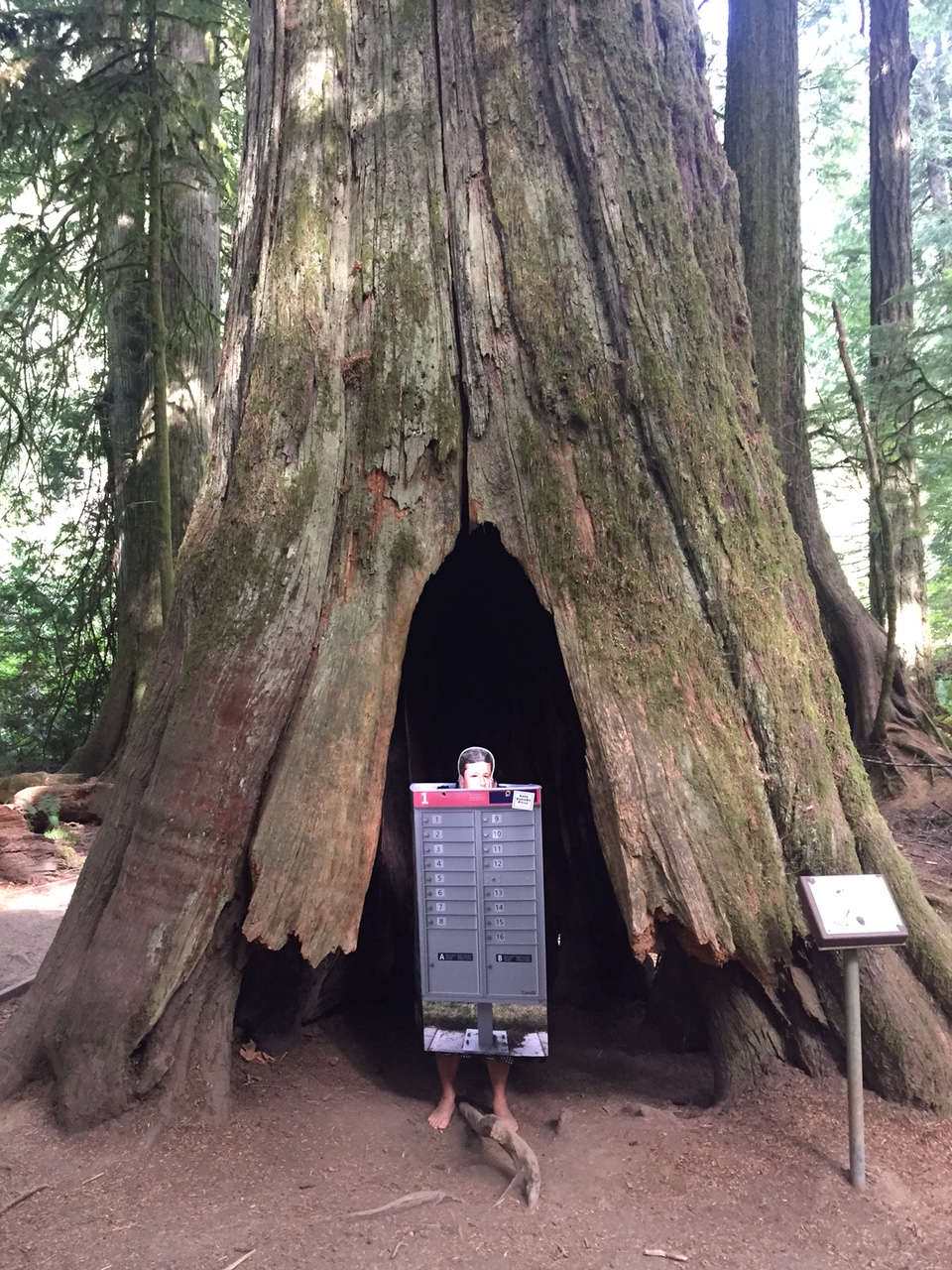 Harper in a CMB in Cathedral Grove